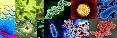 microbiology3